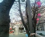 2006.4.3花見