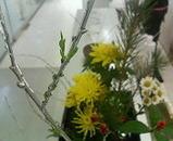 2006.1.17 花