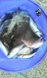 2006.11.20 釣り1