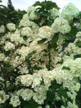 2008.5.19 花
